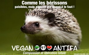 Vegan-antifa-hérisson-vegan-pays-basque-600x375